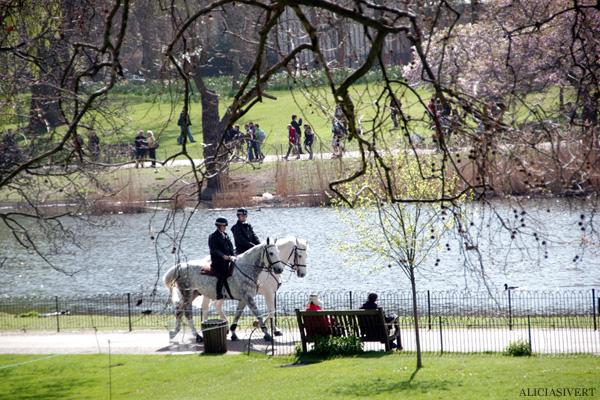 aliciasivert, alicia sivertsson, london, england, St. james's park, spring, vår, häst, hästar, horse, horses