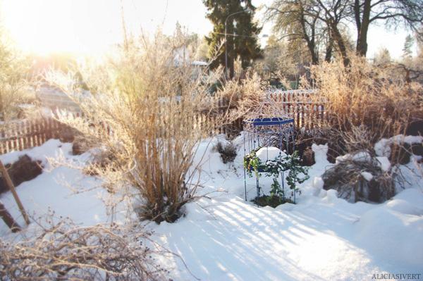 aliciasivert alicia sivertsson snö vinter trädgård motljus sol solsken snow winter garden sweden backlight sun sunshine
