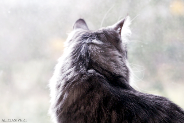 aliciasivert, alicia sivertsson, alicia sivert, cat, cats, katt, katter, tofslan och vifslan