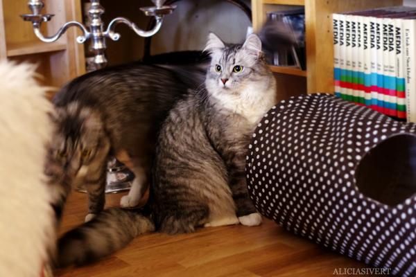 Katterna var inte alls till så mycket hjälp som en hade kunnat förvänta sig. 9fffe3708ba79