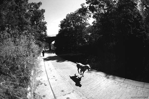 aliciasivert, Alicia Sivertsson, London, svartvitt, black and white, regent's canal