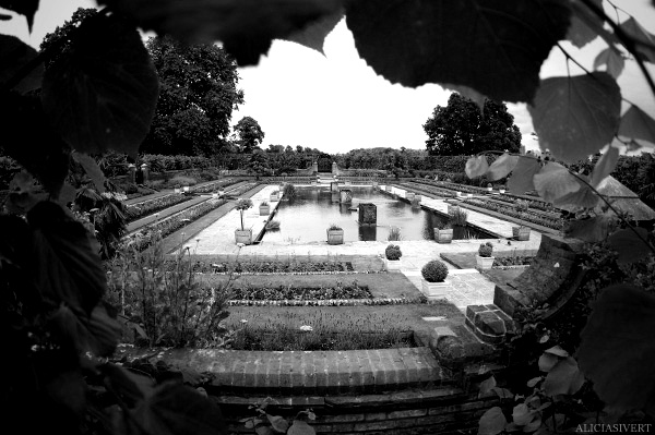 aliciasivert, Alicia Sivertsson, London, svartvitt, black and white, kensington gardens