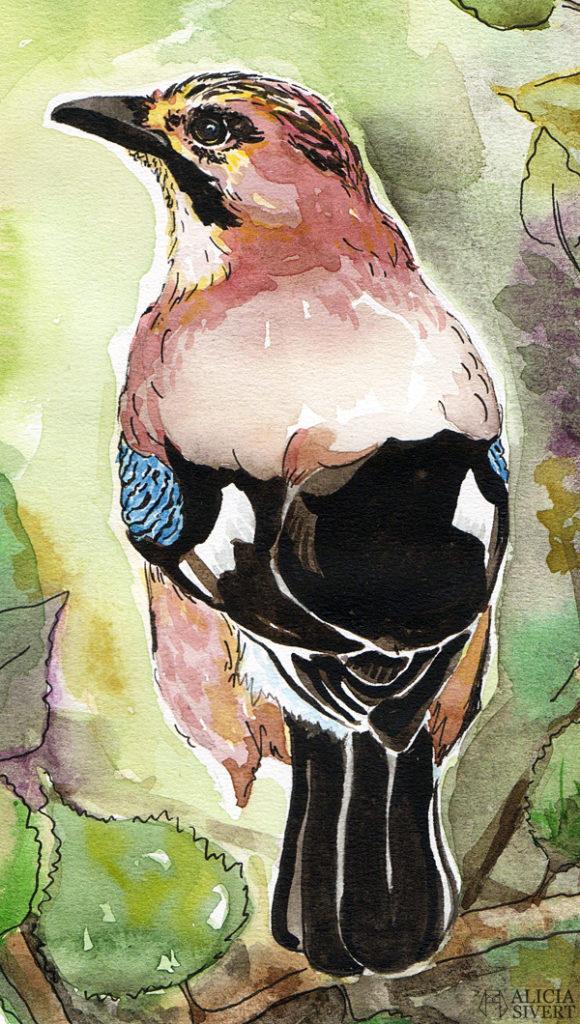 aliciasivert, Alicia Sivertsson, alicia sivert, Eurasian Jay, nötskrika, fågel, garden bird, trädgårdsfågel, paint, painting, aquarelle, akvarell, målning, måla, watercolor, water color, watercolour, colour, vattenfärg, bläck, ink, illustration, skapa, skapande, kreativitet, konst, art, papper