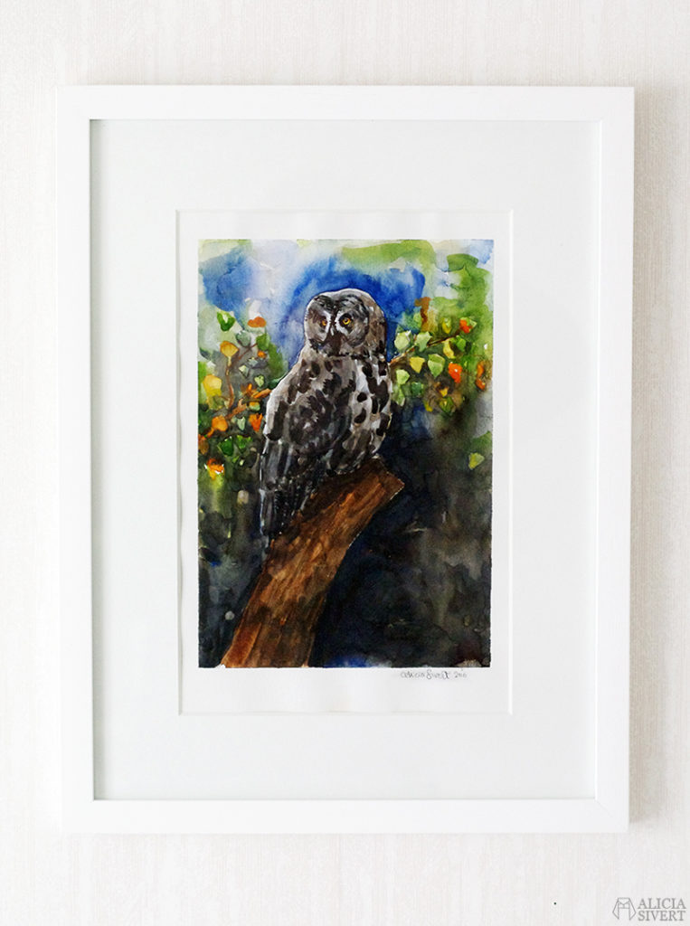 Great grey owl watercolour by Alicia Sivertsson. lappuggla strix nebulosa aliciasivert alicia sivert akvarell aquarelle water color water colour watercolor owl uggla måla målning painting konst art