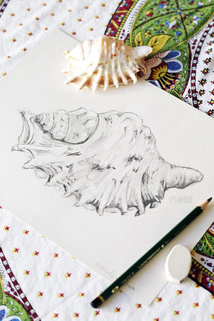 aliciasivert alicia sivert sivertsson art konst skapande kreativitet teckning skiss drawing sketch snäcka shell snäckor shells blyerts grafit