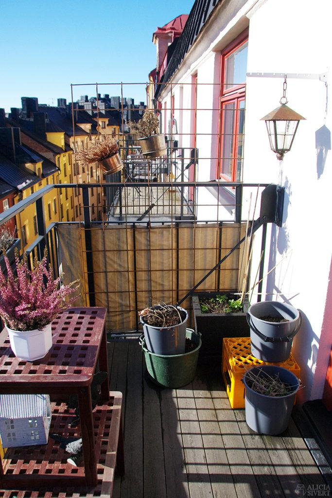 aliciasivert odla på balkong balkongodling odling morötter potatis tomat paprika chili rödbetor majrovor söderläge stockholm kruka krukor redskap trädgård balkongträdgård inspiration växter växt växtgäris