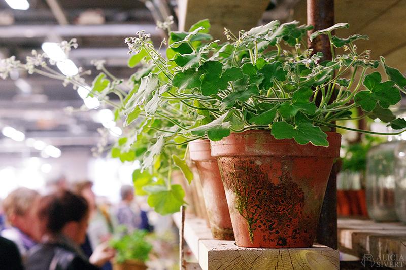 aliciasivert alicia sivert sivertsson trädgårdsmässa stockholmsmässan mässa mässan trädgård trädgårdar odling balkong kruka krukor krukväxt krukväxter odla blommor älvsjö inspiration utställning monter butik pelargon pelargoner terrakotta