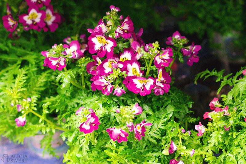 aliciasivert alicia sivert sivertsson trädgårdsmässa stockholmsmässan mässa mässan trädgård trädgårdar odling balkong kruka krukor krukväxt krukväxter odla blommor älvsjö inspiration utställning monter butik