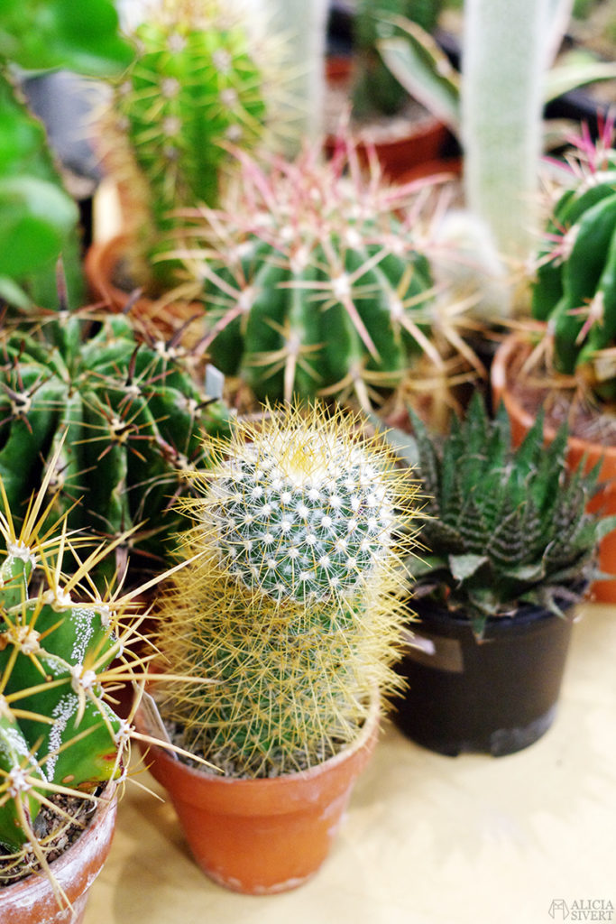 aliciasivert alicia sivert sivertsson trädgårdsmässa stockholmsmässan mässa mässan trädgård trädgårdar odling balkong kruka krukor krukväxt krukväxter odla blommor älvsjö inspiration utställning monter butik kaktus kaktusar