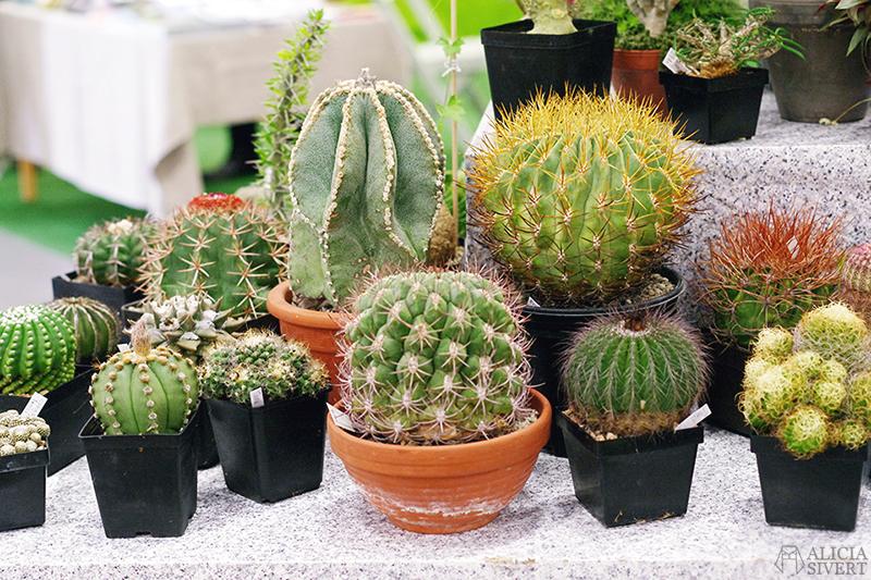 aliciasivert alicia sivert sivertsson trädgårdsmässa stockholmsmässan mässa mässan trädgård trädgårdar odling balkong kruka krukor krukväxt krukväxter odla blommor älvsjö inspiration utställning monter butik kaktusar kaktus