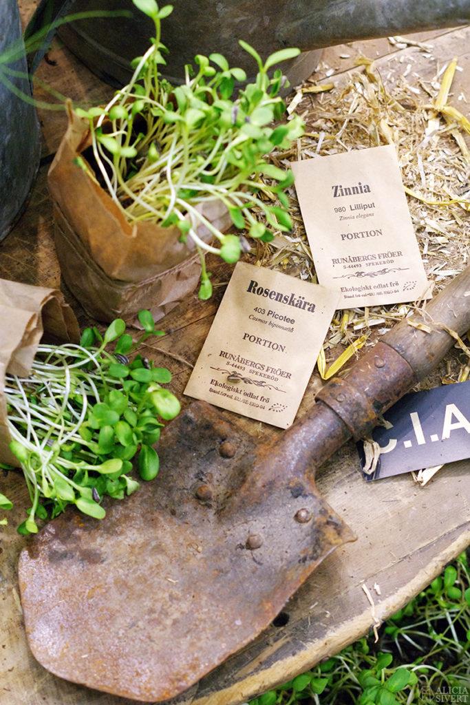 aliciasivert alicia sivert sivertsson trädgårdsmässa stockholmsmässan mässa mässan trädgård trädgårdar odling balkong kruka krukor krukväxt krukväxter odla blommor älvsjö inspiration utställning monter butik spade frön