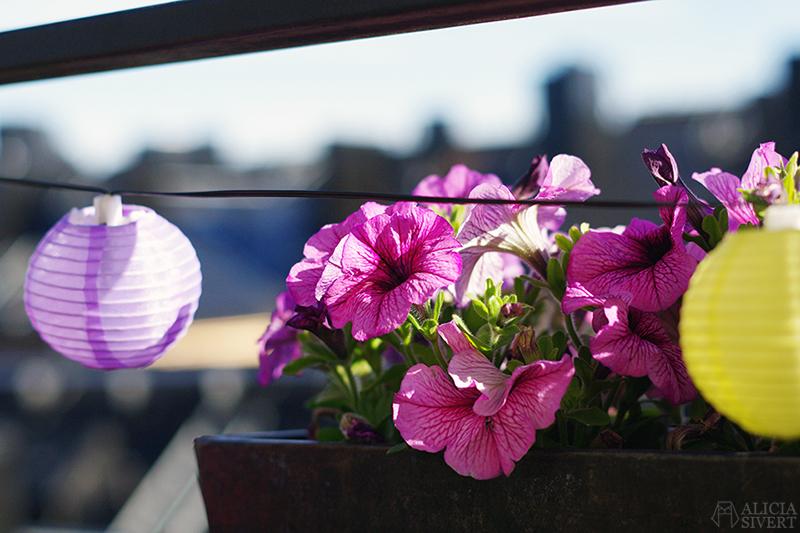 aliciasivert alicia sivert sivertsson odla på balkong balkongodling odling trädgård inspiration inreda inredning kruka krukor det norske hageselskap hage på balkongen balkonglåda balkonglådor petunia petunior