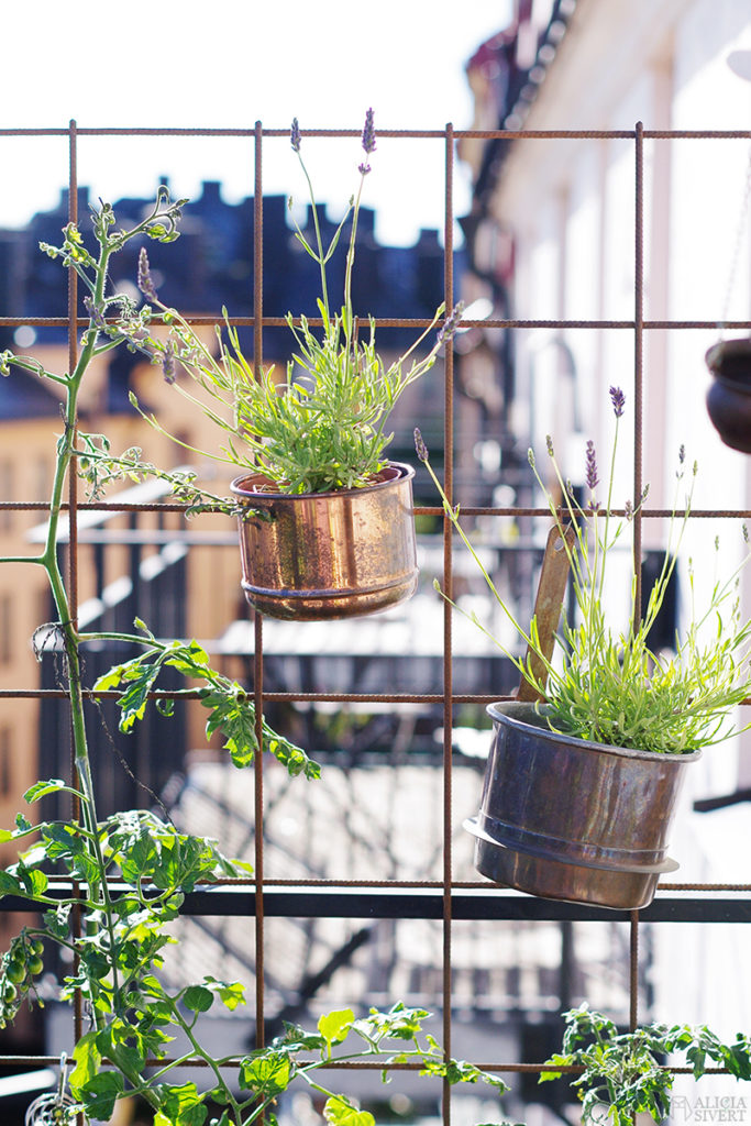 aliciasivert alicia sivert sivertsson odla på balkong balkongodling odling trädgård inspiration inreda inredning kruka krukor det norske hageselskap hage på balkongen armeringsnät armeringsjärn lavendel i kruka spaljé