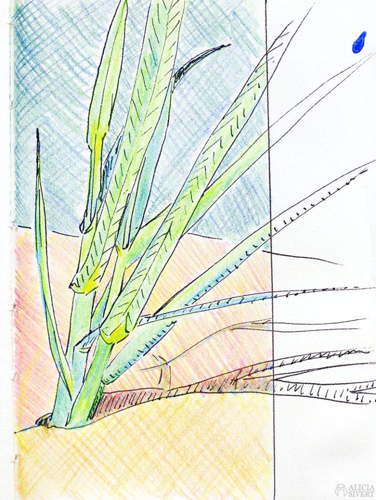 aliciasivert alicia sivert sivertsson målning måla måleri skiss teckning sketch painting vass blad strån gräs sandstrand strand