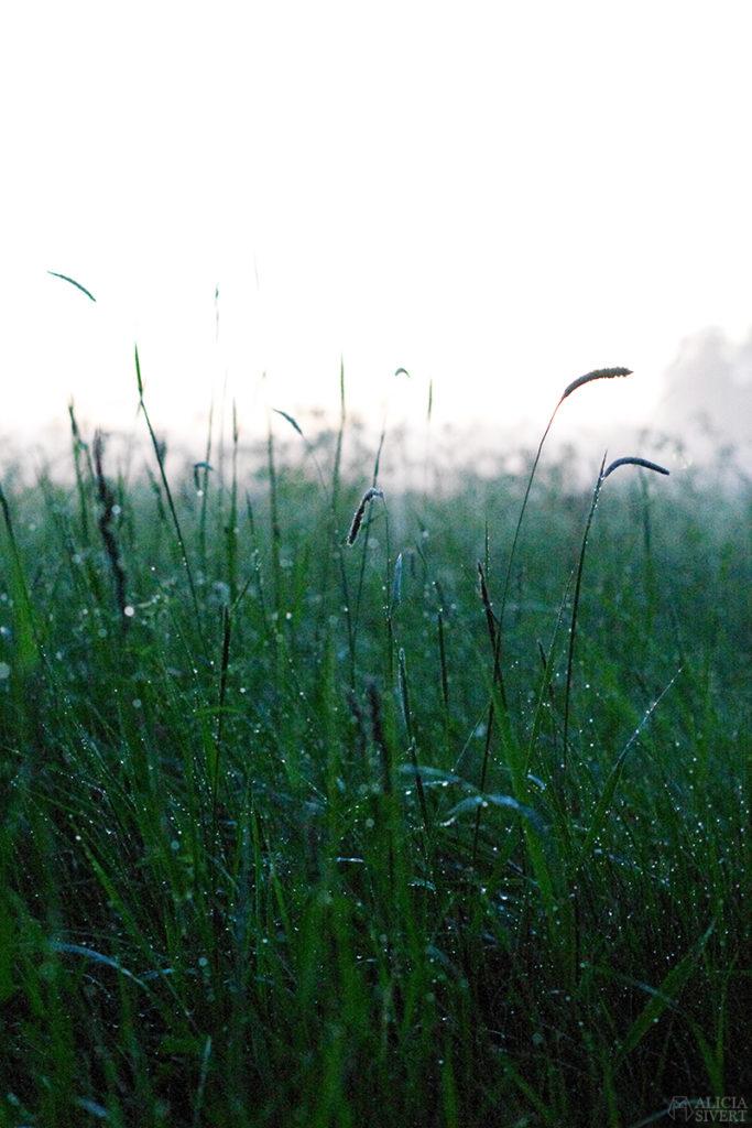 uttersberg dimma fog dusk skymning sommarkväll sommarnatt kväll äng gräs grass dagg