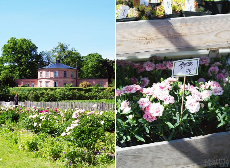 aliciasivert alicia sivert alicia sivertsson djurgården stockholm utflykt utflyktsmål rosendals trädgård blommor slott slottet