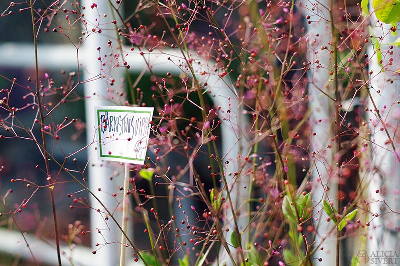 aliciasivert alicia sivert alicia sivertsson djurgården stockholm utflykt utflyktsmål friluftsmåleri rosendals trädgård slott bärnstensvippa
