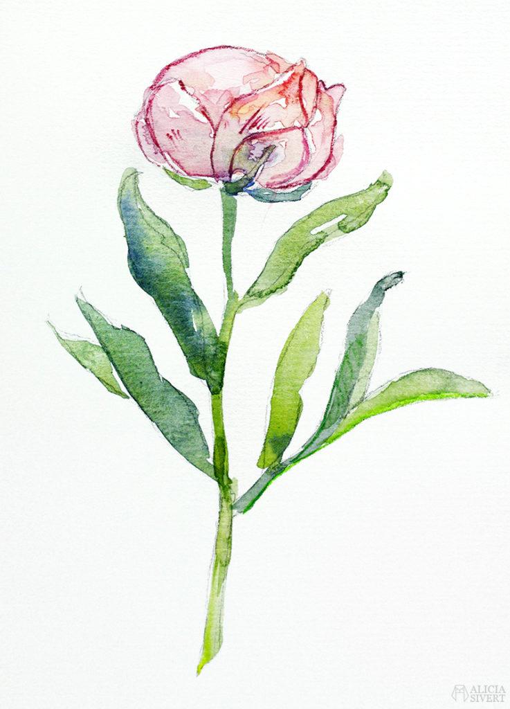 Teckningsutmaningen i juni, foto av Alicia Sivertsson. aliciasivert teckning teckningar teckna rita skiss skissa skapa skapande utmaning kreativitet skaparutmaning bloggutmaning månadsutmaning kreativ penna pennor akvarellpenna akvarellpennor illustration pion pioner blomma blommor