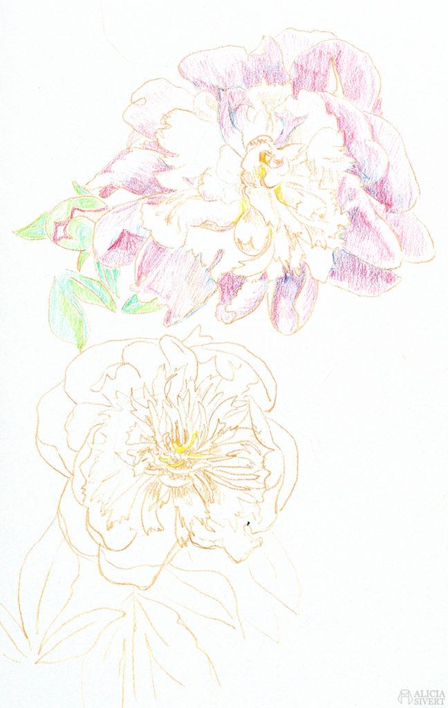 Teckningsutmaningen i juni, foto av Alicia Sivertsson. aliciasivert teckning teckningar teckna rita skiss skissa skapa skapande utmaning kreativitet skaparutmaning bloggutmaning månadsutmaning kreativ penna pennor akvarellpenna akvarellpennor pion pioner blomma blommor illustration