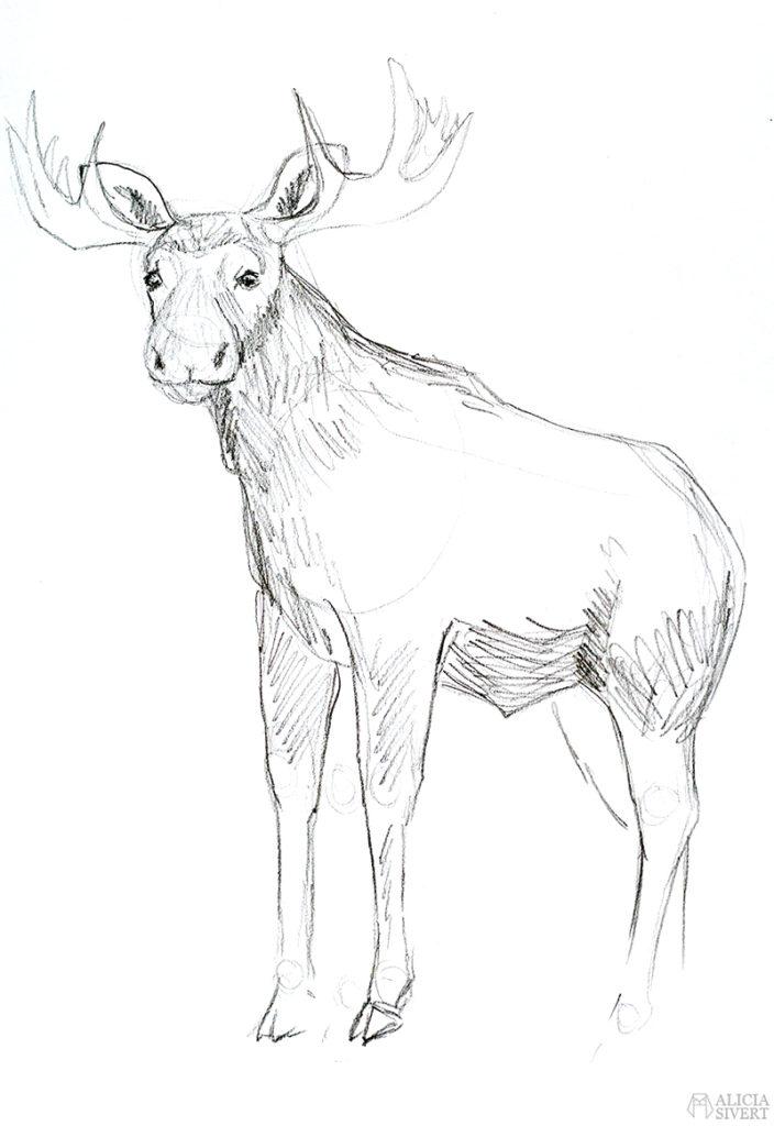 Teckningsutmaningen i juni, foto av Alicia Sivertsson. aliciasivert teckning teckningar teckna skiss skissa rita skapa skapande utmaning kreativitet skaparutmaning bloggutmaning månadsutmaning kreativ penna pennor blyertspennor blyertspenna älg älgtjur