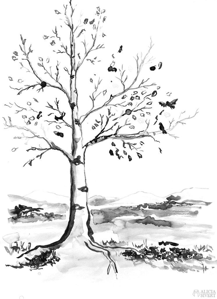 Teckningsutmaningen i juni, foto av Alicia Sivertsson. aliciasivert teckning teckningar teckna skiss skissa rita skapa skapande utmaning kreativitet skaparutmaning bloggutmaning månadsutmaning kreativ flytande tusch bläck träd björk fjäll fjällen fjällbjörk