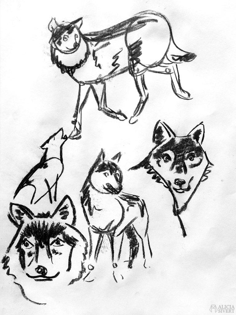 Teckningsutmaningen i juni, foto av Alicia Sivertsson. aliciasivert teckning teckningar teckna skiss skissa rita skapa skapande utmaning kreativitet skaparutmaning bloggutmaning månadsutmaning kreativ penna pennor blyertspennor blyertspenna varg vargar kol