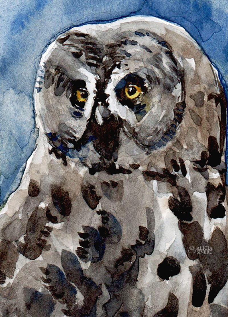 aliciasivert.se aliciasivert alicia sivert alicia sivertsson Great grey owl watercolour by Alicia Sivertsson. lappuggla strix nebulosa akvarell aquarelle water color water colour watercolor owl uggla måla målning painting konst art målningar fågel fåglar svensk natur