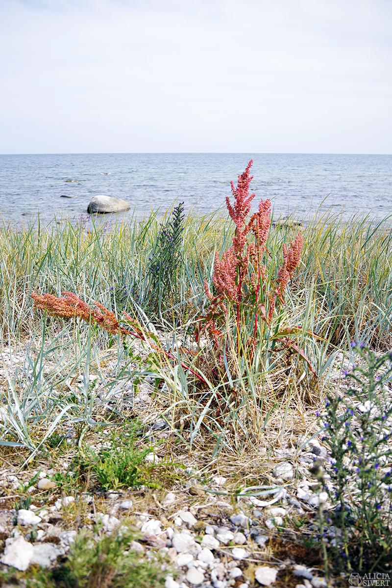 strand Gotland aliciasivert.se