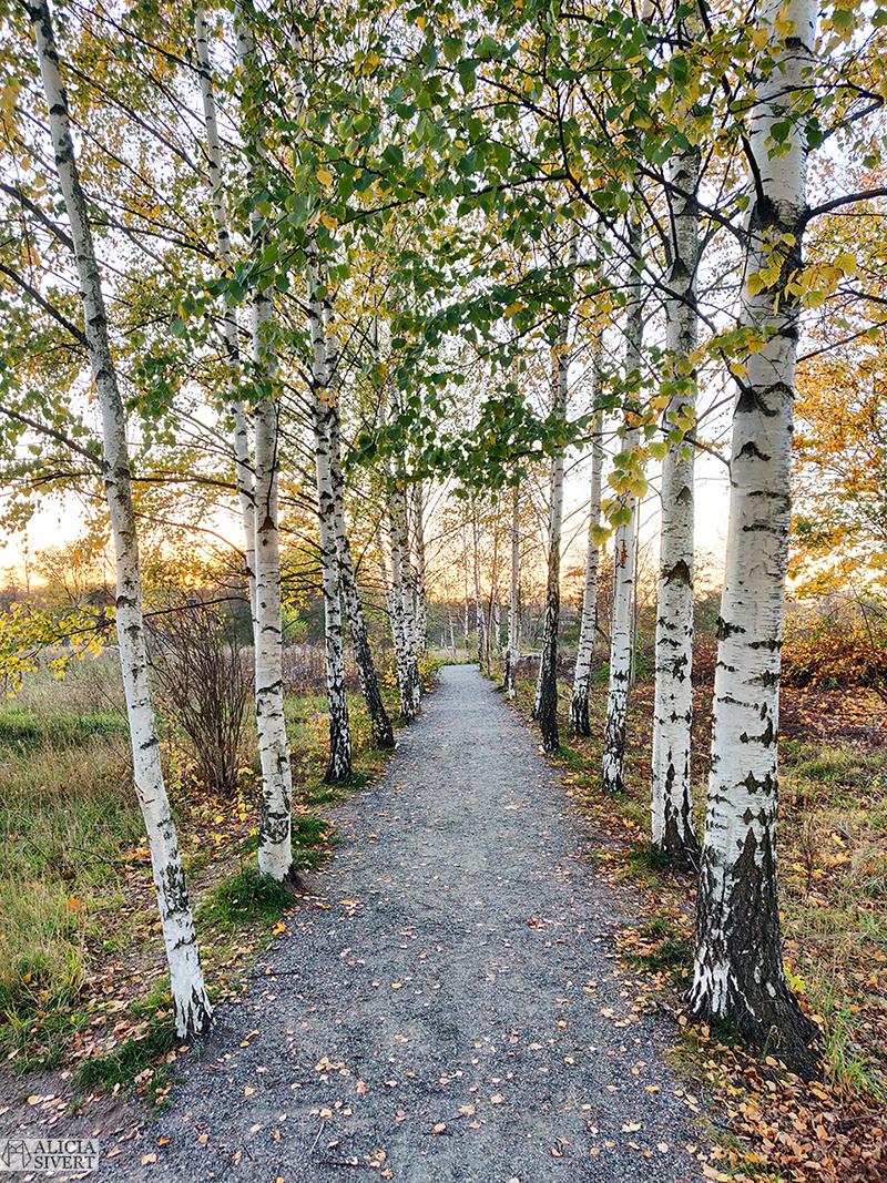Björkallé. Promenad i Gustavsbergs hamn, vid skymningen en gyllene höstafton i oktober. Foto av Alicia Sivertsson - aliciasivert.se