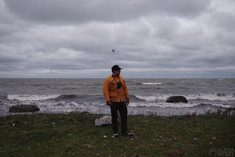Höst på södra Gotland. Foto av Alicia Sivertsson. Alicia sivert aliciasivert aliciasivert.se sudret storsudret andreas fågel norebod fiskeläge