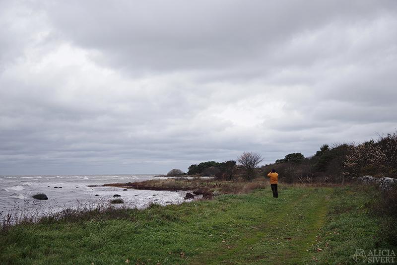 Höst på södra Gotland. Foto av Alicia Sivertsson. Alicia sivert aliciasivert aliciasivert.se sudret storsudret andreas norebod fiskeläge