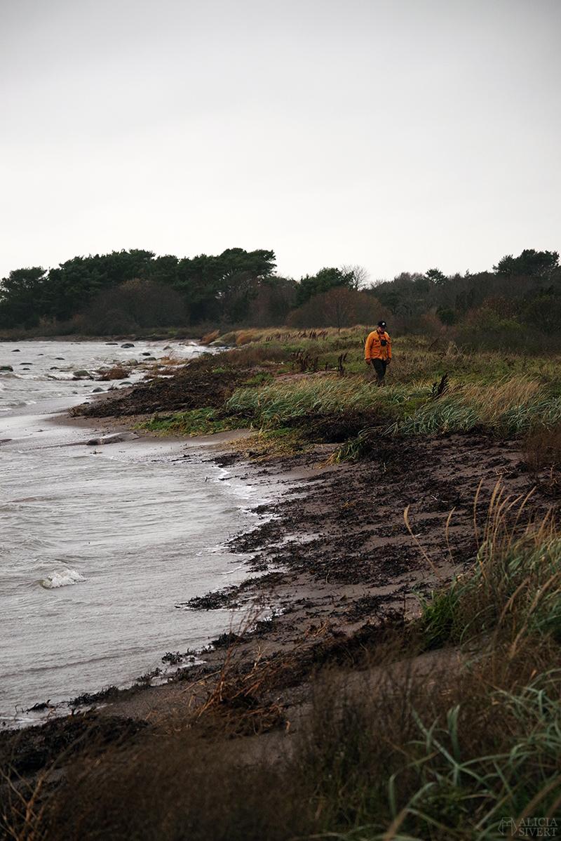 Höst på södra Gotland. Foto av Alicia Sivertsson. Alicia sivert aliciasivert aliciasivert.se sudret storsudret strand hav havet haugbjärgar andreas