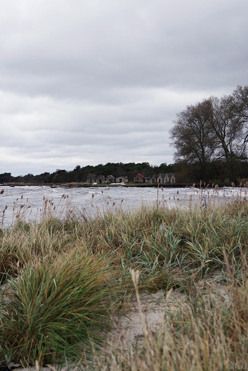 Höst på södra Gotland. Foto av Alicia Sivertsson. Alicia sivert aliciasivert aliciasivert.se sudret storsudret nore fiskeläge fiskebod fiskebodar norebod
