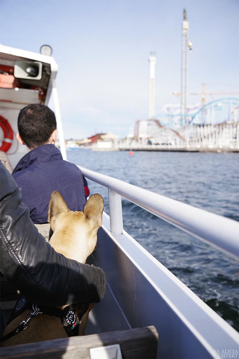 Gröna lund båt fransk bulldogg