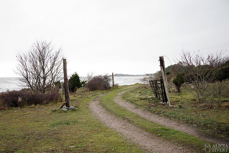 Höst på södra Gotland. Foto av Alicia Sivertsson. Alicia sivert aliciasivert aliciasivert.se sudret storsudret strand hav havet haugbjärgar grind