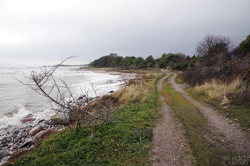Höst på södra Gotland. Foto av Alicia Sivertsson. Alicia sivert aliciasivert aliciasivert.se sudret storsudret strand hav havet haugbjärgar grusväg