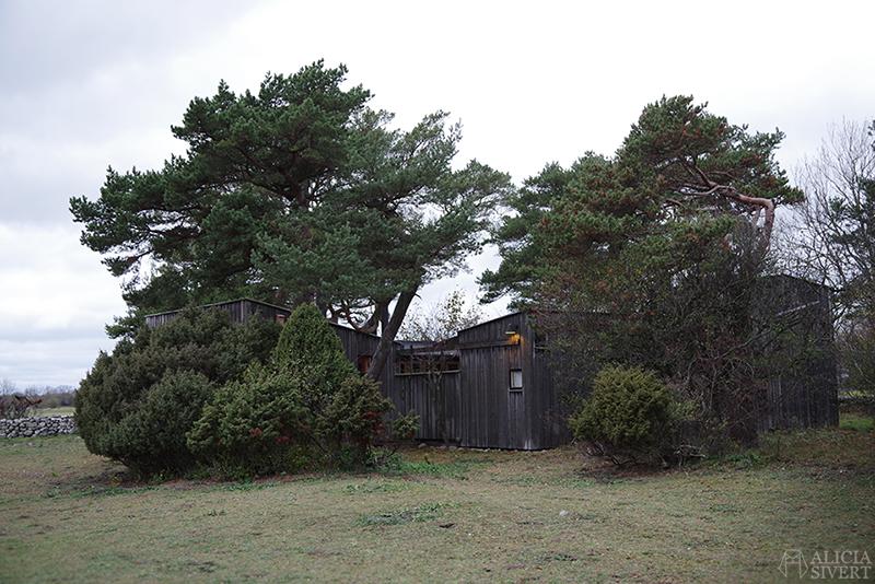 Höst på södra Gotland. Foto av Alicia Sivertsson. Alicia sivert aliciasivert aliciasivert.se sudret storsudret nore norehuset