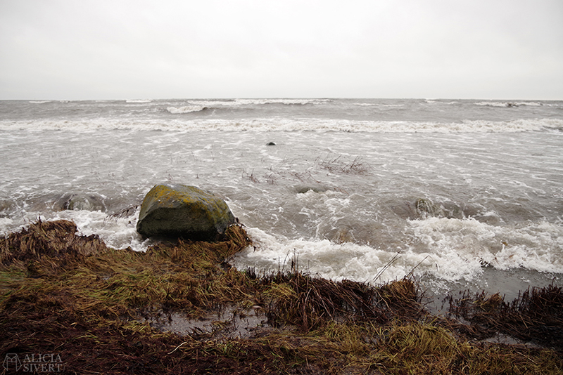 Höst på södra Gotland. Foto av Alicia Sivertsson. Alicia sivert aliciasivert aliciasivert.se sudret storsudret strand hav havet haugbjärgar