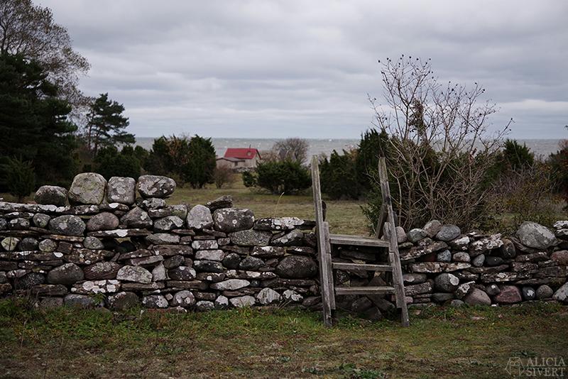 Höst på södra Gotland. Foto av Alicia Sivertsson. Alicia sivert aliciasivert aliciasivert.se sudret storsudret nore stenvast träd vast mur stätta norebod fiskeläge