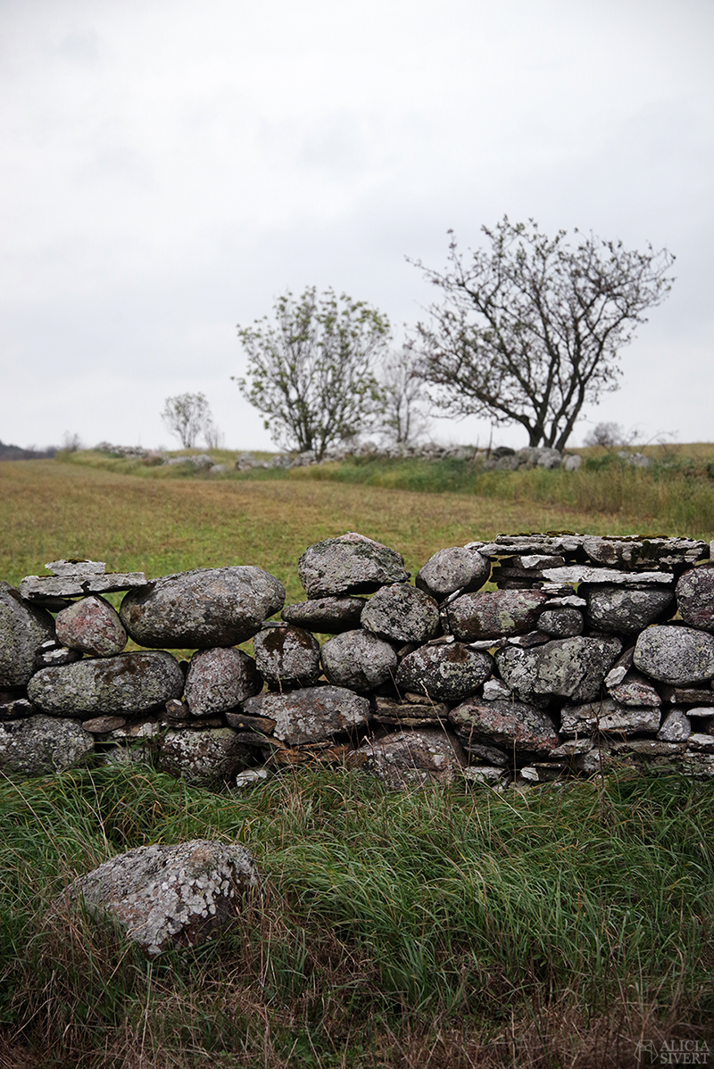 Höst på södra Gotland. Foto av Alicia Sivertsson. Alicia sivert aliciasivert aliciasivert.se sudret storsudret stenvast vast mur stenar