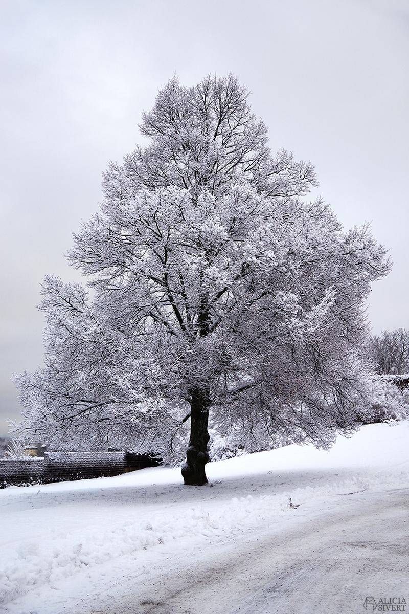 december snö stockholm jul träd