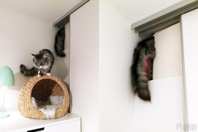 februari förra året - www.aliciasivert.se // katten tofslan lär sig öppna garderobsdörren och somnar på julgransbelysningen