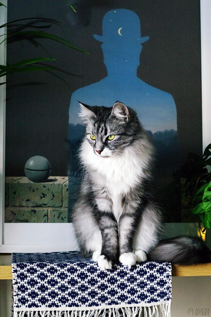 februari förra året - www.aliciasivert.se // katten vifslan rene magritte tavla
