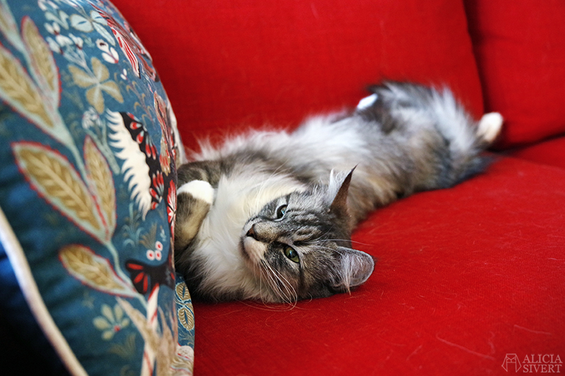 Katten Vifslan i soffan, foto av Alicia Sivertsson - www.aliciasivert.se