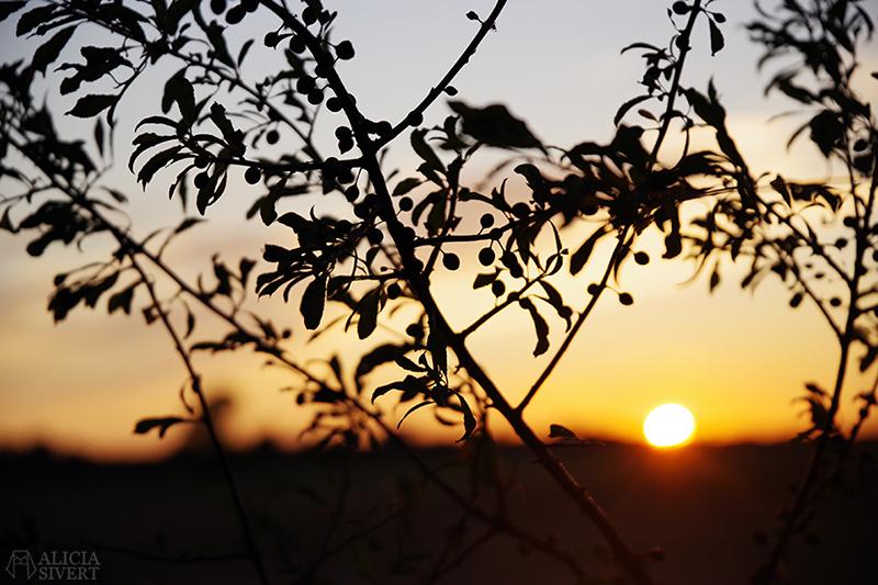 solnedgång gotland konmari