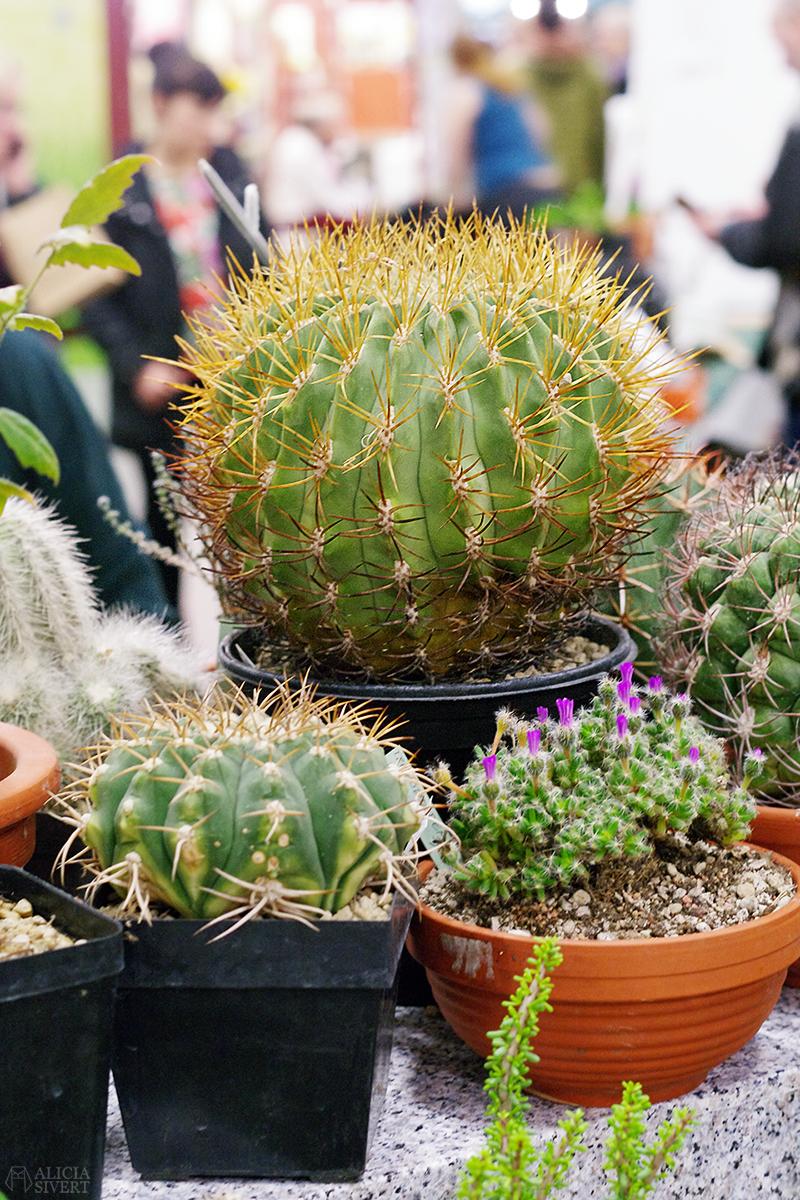 Nordiska Trädgårdar 2018 Trädgårdsmässan Stockholm Älvsjö kaktus kaktusar