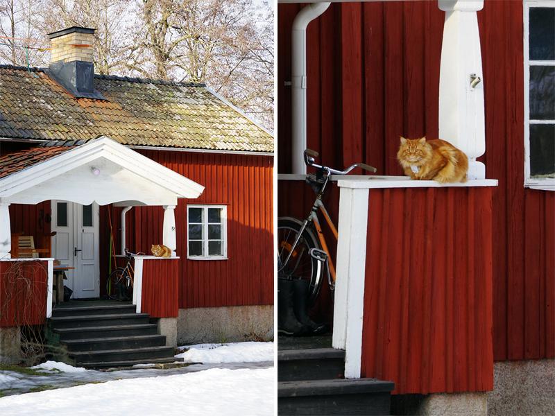 Ösbyrundan, Gustavsberg - www.aliciasivert.se // vårvinter promenad vandring runt Ösby träsk katt
