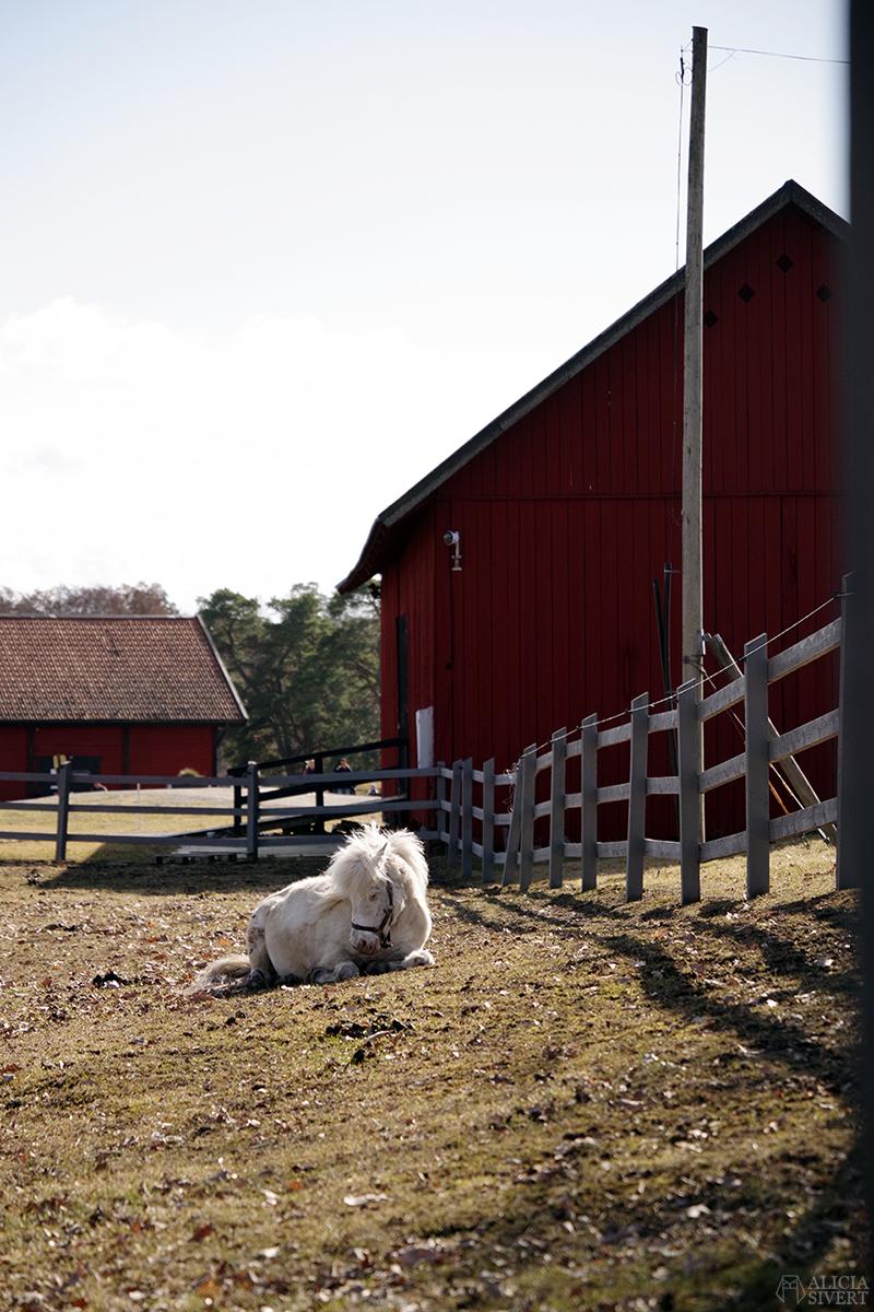 Rönninge by i Täby, foto av Alicia Sivertsson - www.aliciasivert.se // shetlandsponny shettis ponny häst
