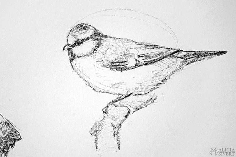 Blyertsskisser av Alicia Sivertsson - www.aliciasivert.se // djur teckning skiss skisser teckningar blyerts blyertsskiss blyertsteckning blåmes fågel fåglar