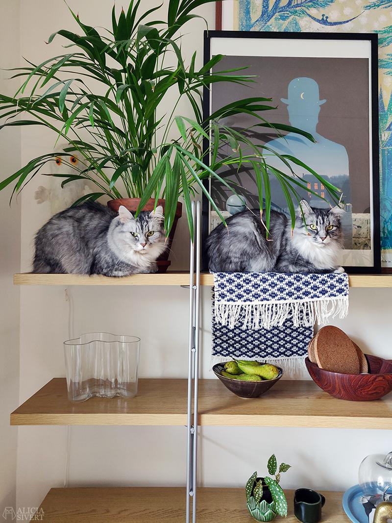 Katten Tofslan och Vifslan - www.aliciasivert.se / april